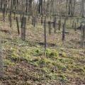 Reboisement bois de Beaumont